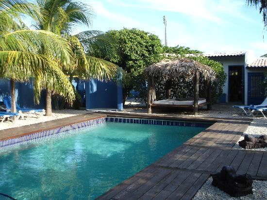 Caribbean Chillout Apartments : heerlijk zwembad en prachtige tuin!