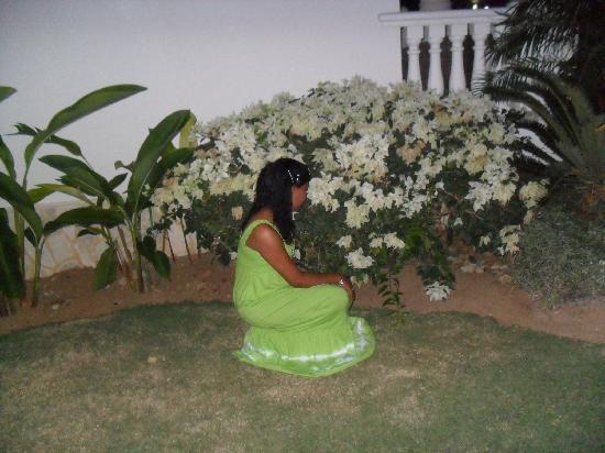 Hotel Albachiara : Beautiful Garden
