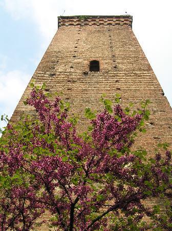Castello di Novi Ligure : La torre di Novi in primavera