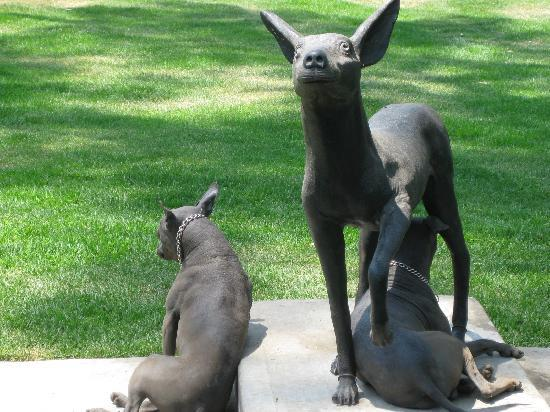 Museo Dolores Olmedo Patino: Mexican dogs