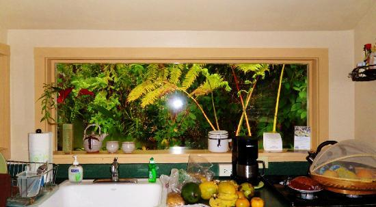 Volcano Artist Cottage: kitchen with large window