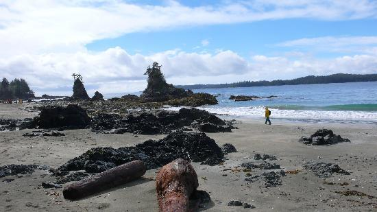 Imperial Eagle Lodge: Brady's Beach is a popular walk