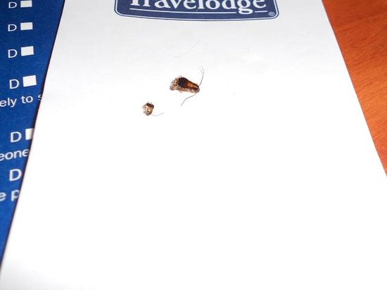 LAX South Travelodge: Dead Roaches presented to front desk.