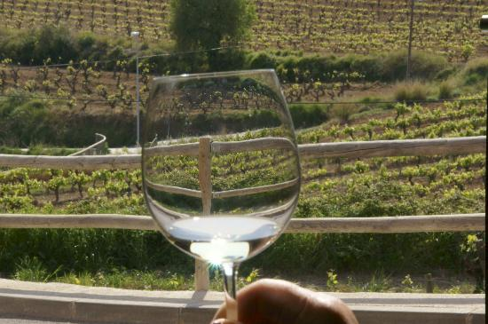 Spanish Trails Day Tours and Events : vineyard tour