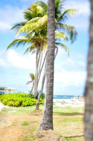 Nisbet Plantation Beach Club: Palm Trees in the garden