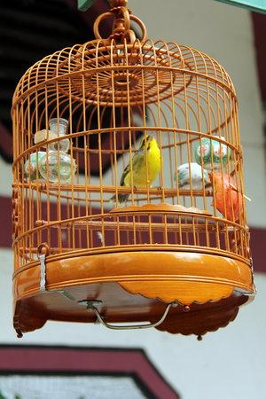 Bird Garden Yuanpu Street : Bird in cage