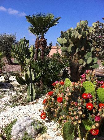 Terra Mia Marrakech: Gardens in the Riad