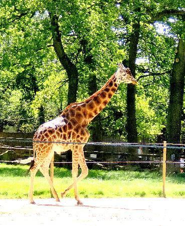 Knowsley Safari Park Hotels