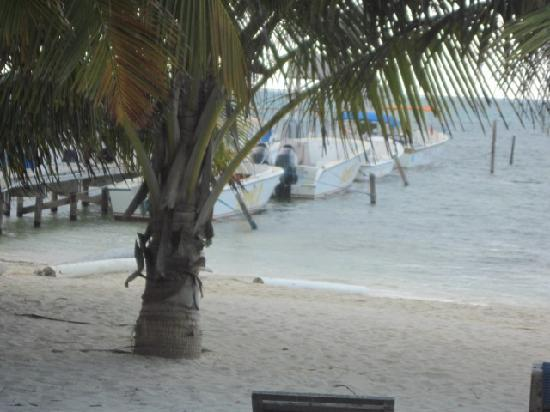 Sunset Beach Resort: These are the Suya tours boats, view from condo porch