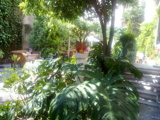 Nice Garden Hotel : the beautiful garden from the step of our room