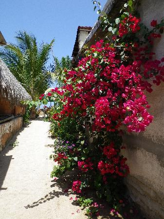 Casa Rosa : Path to the beach