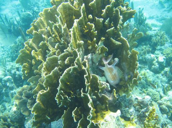 ترنيف آيلاند ريزورت: Reef Fish