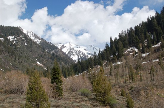 Silver City Mountain Resort: Mineral King Valley in Sequoia