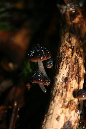 Tarkine Wilderness Lodge: Forest Fungi