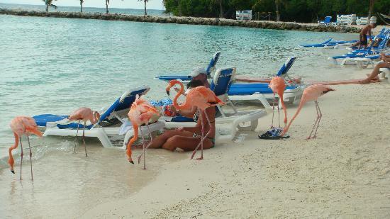 erotische begleitung flamingo island