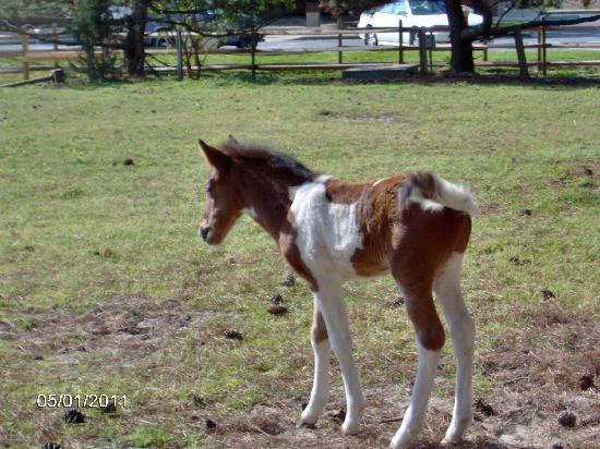 Foal at the Refuge Inn