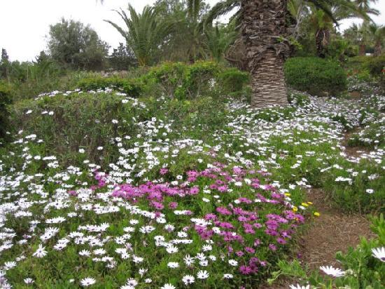โรงแรมเลอซูลตาน: les jardins
