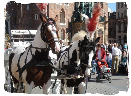Pro Tours Cracow - Day Tours: Horses at the main square in Krakow