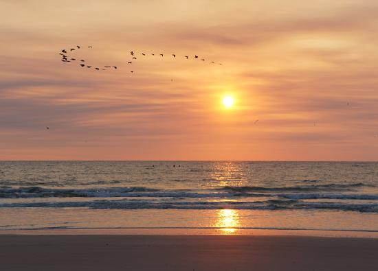 Amelia-øya, FL: Birds Flying High Amelia Island Beach Sunrise