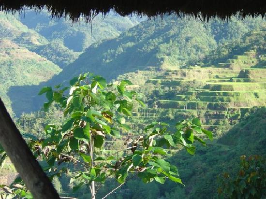 Native Village Inn & Restaurant: Vue sur les rizières