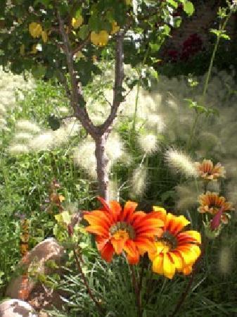 El Zaguan : las flores