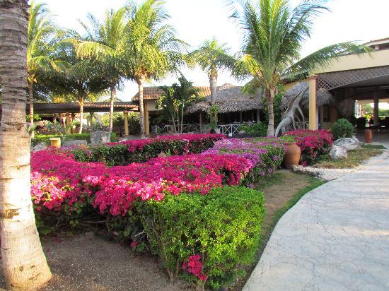 Melia Cayo Santa Maria: beautiful gardens everywhere