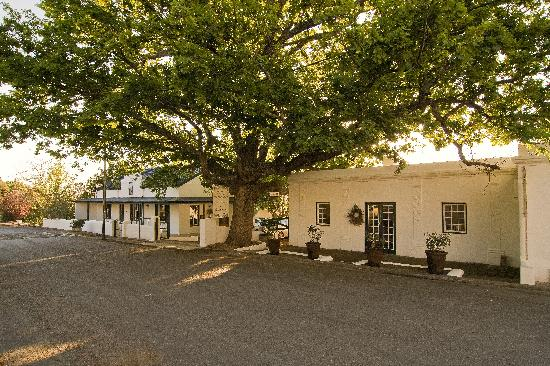 Roosje van de Kaap: The front characterized by our centuries old oak tree and restaurant building from 1860.