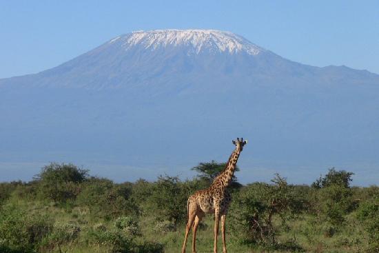 Wildlife Kenya Safaris - Day Trips: Nice view of Kilimanjaro