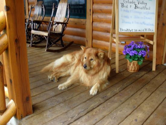 Glade Valley Bed and Breakfast: Large Friendly Dog
