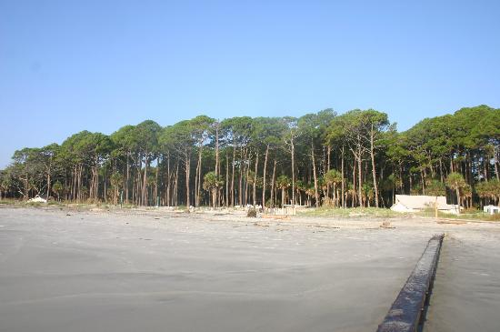 Hunting Island State Park Campground: A view of the campground from the beach