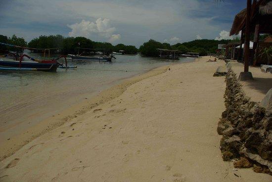 نوسا ليمبونجان, إندونيسيا: Beach near Mangroves