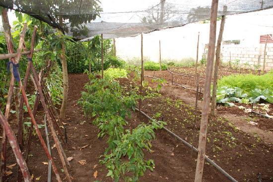 Casa Papo y Niulvys: huerto de hortalizas