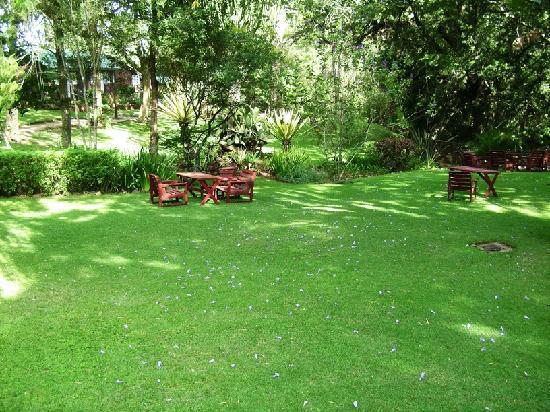 Naro Moru, เคนยา: Serene Gardens 1