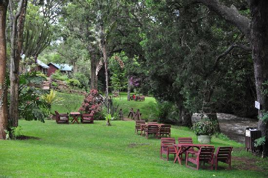 Naro Moru River Lodge: Serene Gardens 2