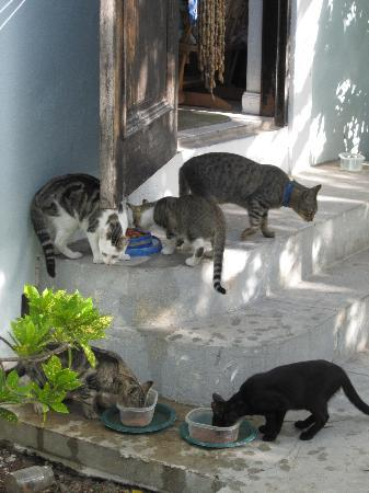 Grand Turk Inn: Out on the back stoop, Donovan feeds the Inn's cats. Don't worry, they stay on the grounds and d