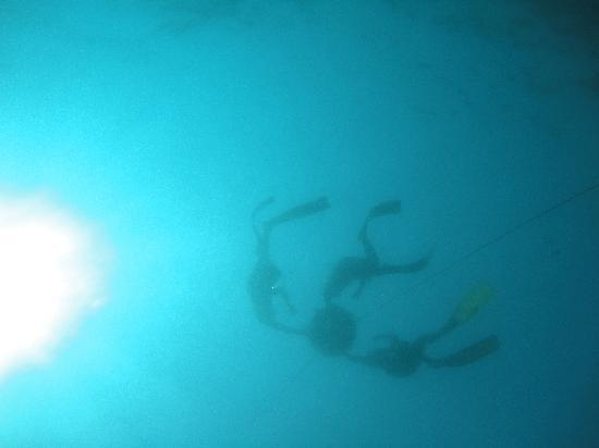 Al Boom Diving: freediving with al boom