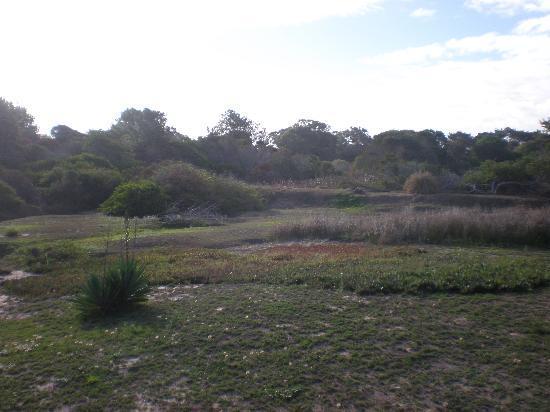 Posada Lunita de Jose Ignacio : Un retazo de jardín/bosque