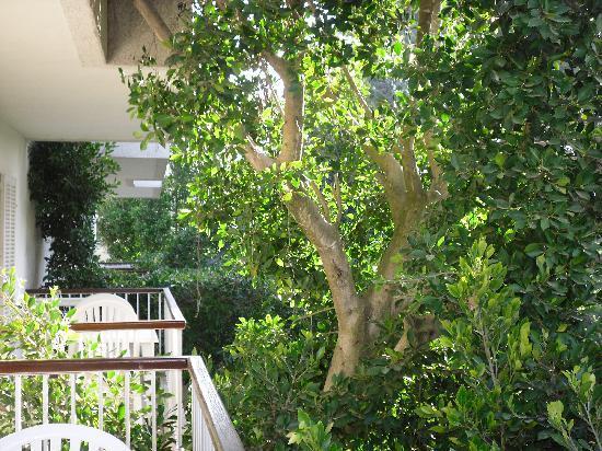 Houm Plaza Son Rigo: bista jardin desde balcon