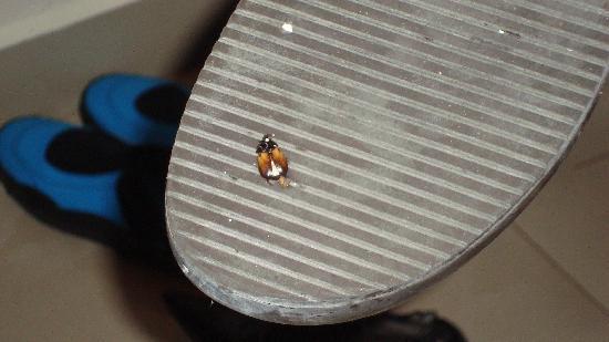 Sensimar Seaside Suites & Spa: Killing bugs after housekeeping