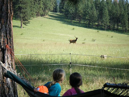 LocKey U Outfitters: Watching the elk come into the ranch