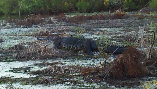 Myakka River State Park: Close encounter