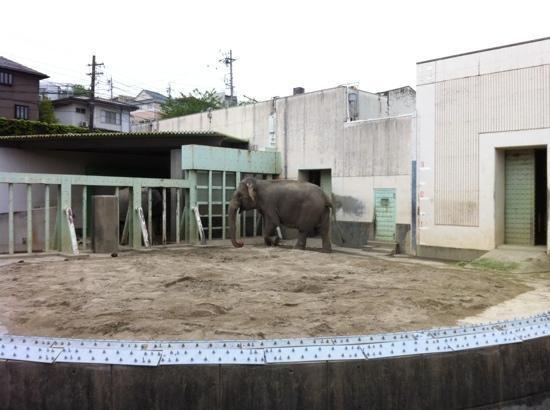 Higashiyama Zoo & Botanical Garden: zoológico