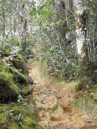 Mount Kinabalu: Actual Condition of Mesilau Track