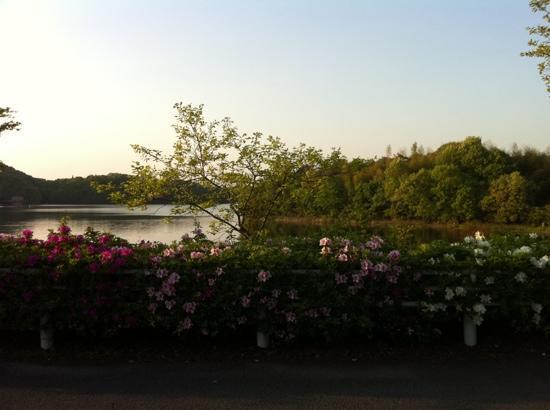 Iruka Pond: otra vista