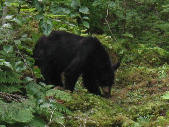 Alaska Creekside Cabins: they call me mr bear!