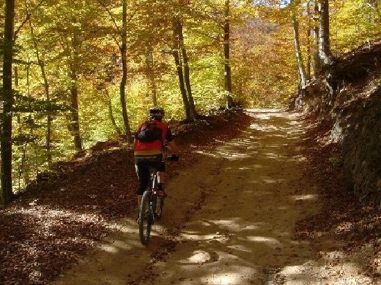 Terra BikeTours - Private Day Tours: Barcelona Mountain bike tours