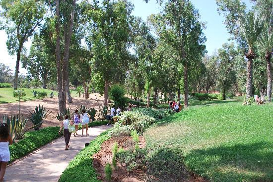 VClub Agadir : Palmeras