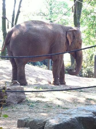 Antwerp Zoo (Dierentuin) : dumbo