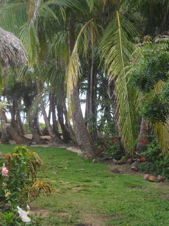 Farm Peace & Love: path from cabana to ocean