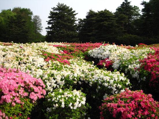 Tokyo Metropolitan Jindai Botanical Park